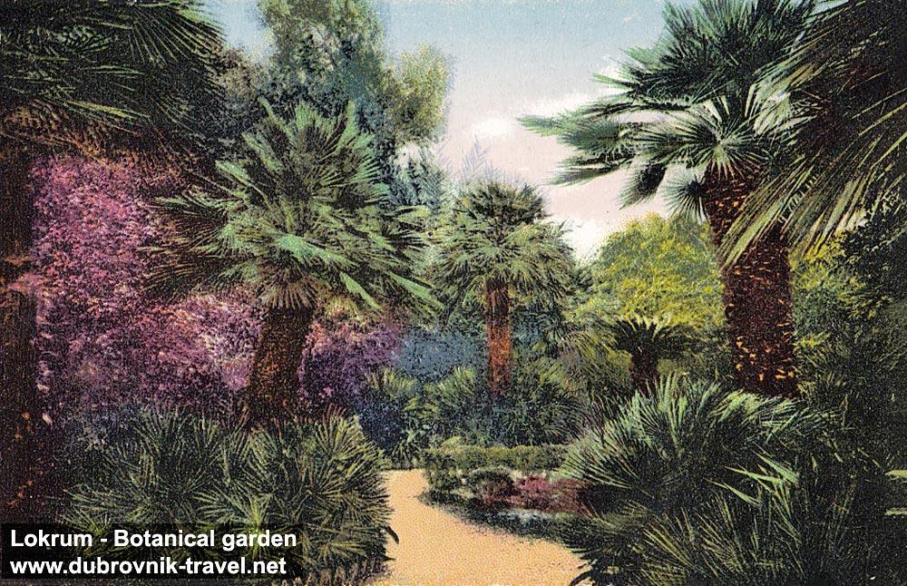 Palm Trees @ Botanical Garden on Lokrum