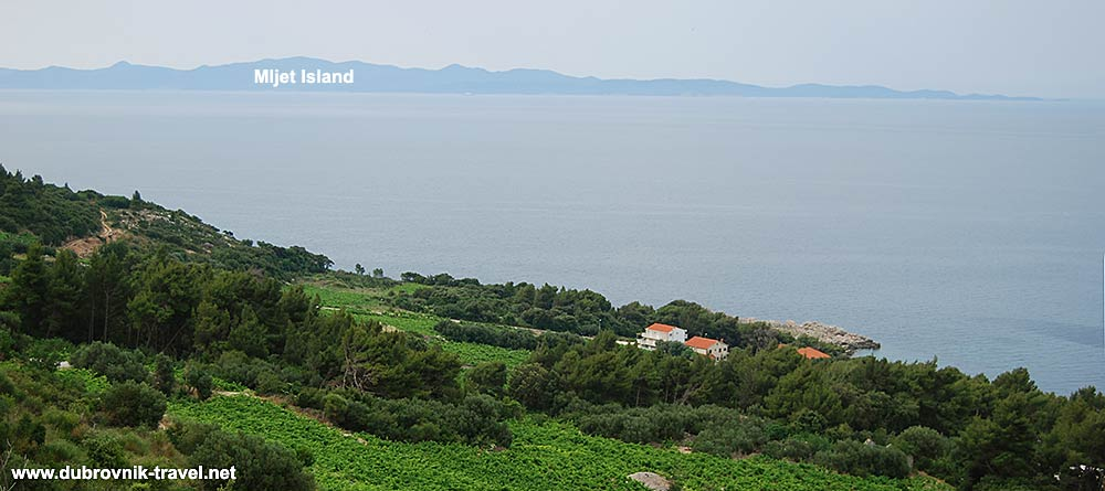 Day trip from Dubrovnik to Peljesac - views over Mljet