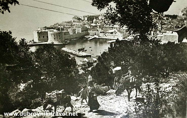 traveling-by-donkey-dubrovnik1920s