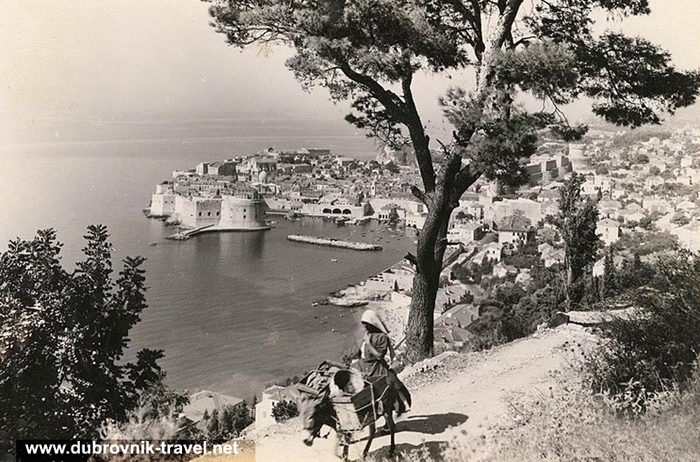 traveling-by-donkey-dubrovnik1949a